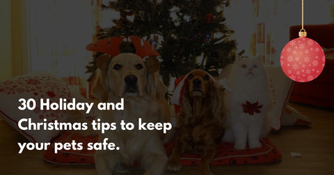 30 Ways to keep your pets happy and safe during the holidays