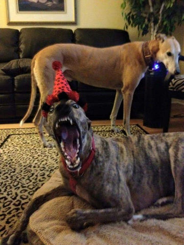 Greyhound Party Hat