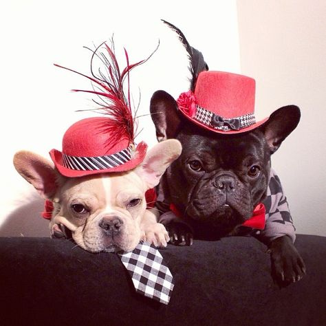 French Bulldog valentine's day couple