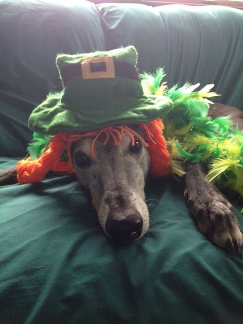 St. Patrick's Day Greyhound