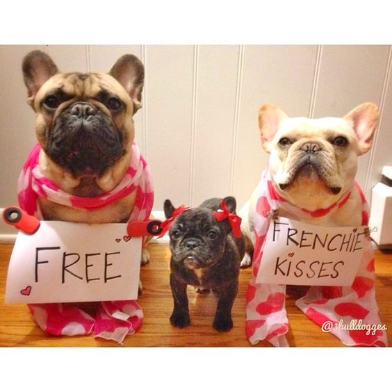 Free Frenchie Kisses Valentine's Day French Bulldogs