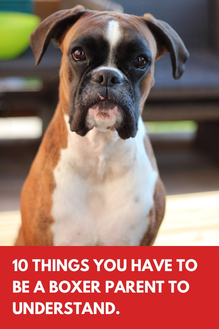 10 things you have to be a boxer parent to understand