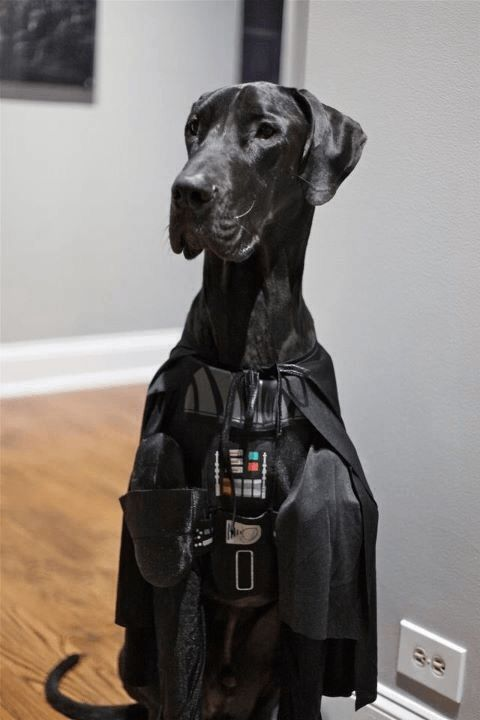Great Dane Darth Vader Costume
