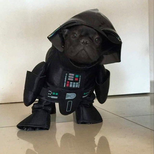 Darth Vader Frenchie Costume