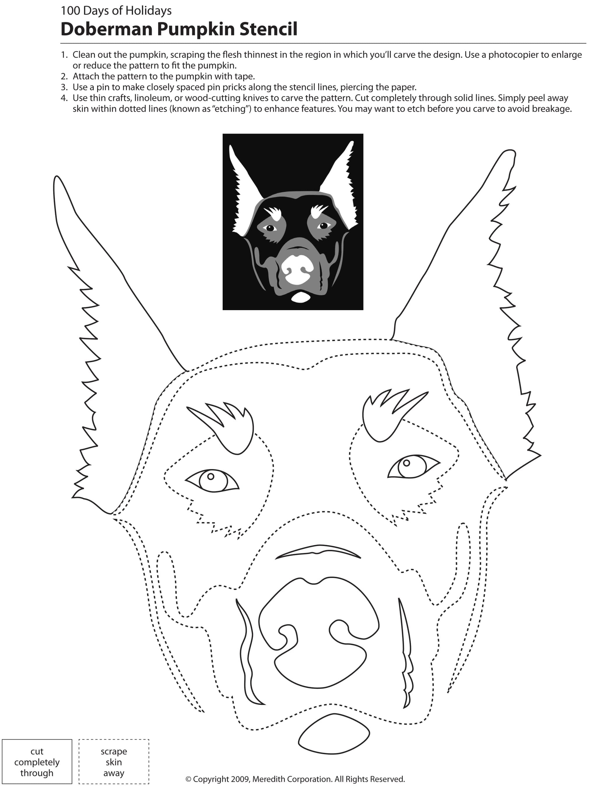 Doberman with Cropped Ears Pumpkin Carving Stencil