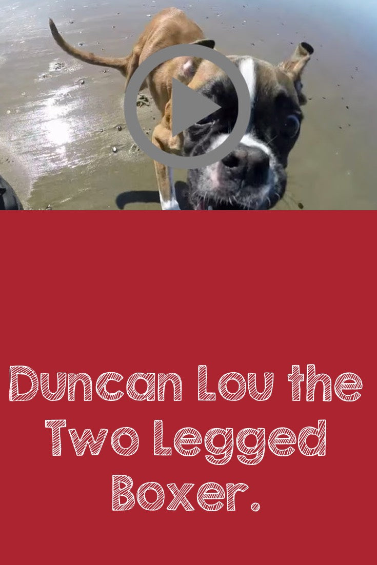 Duncan Lou the Two Legged Boxer