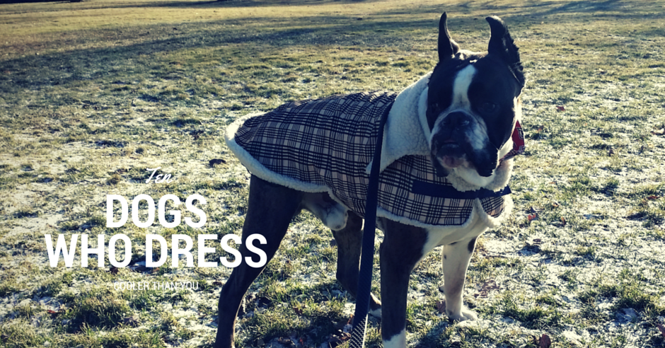 Ten Dogs Who Dress Better Than You