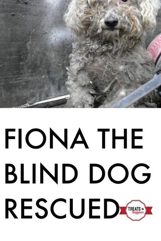 Fiona the Blind Dog rescue story