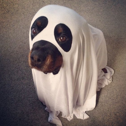 Ghost Rottweiler Costume