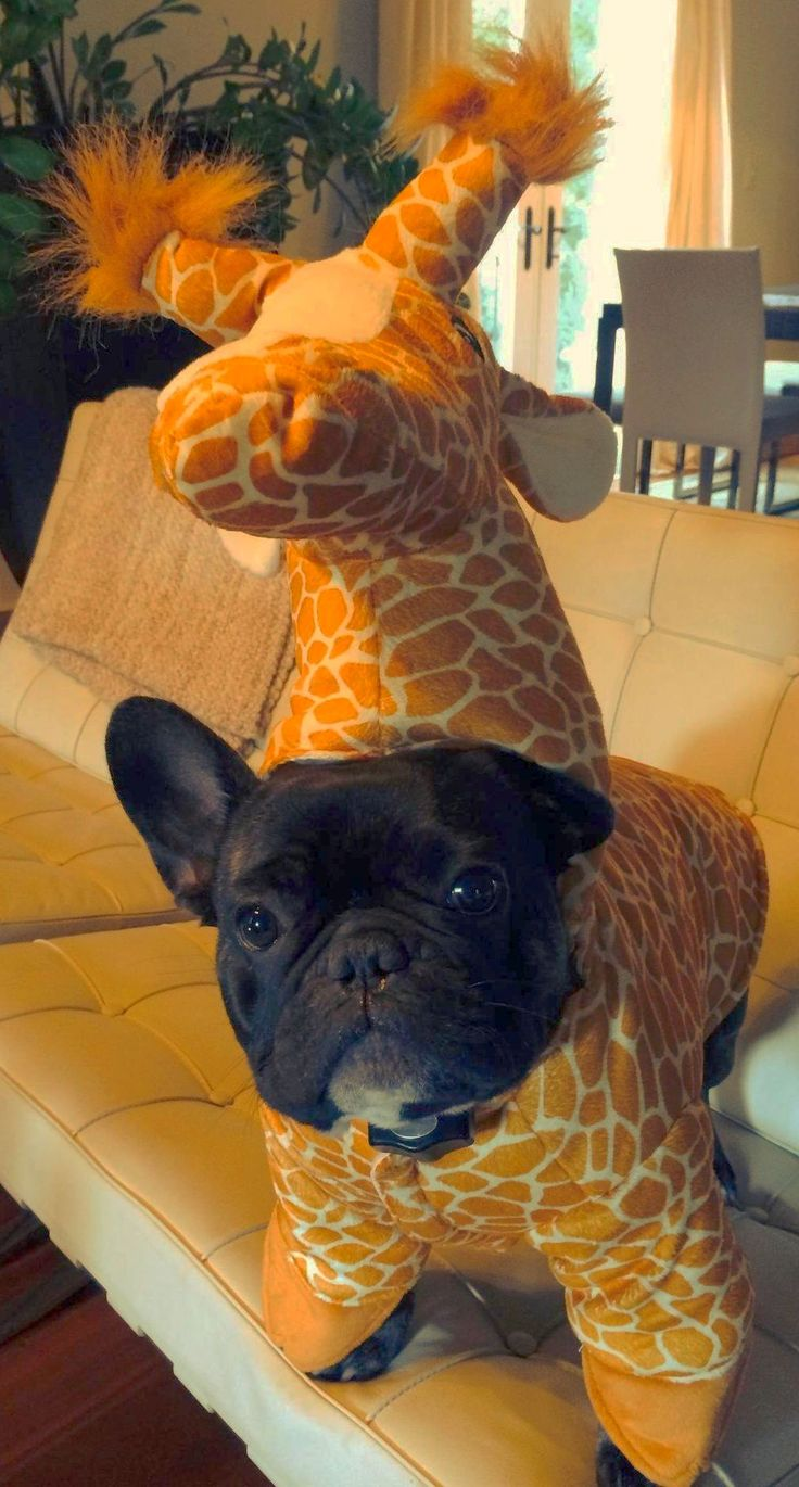 Giraffe Frenchie Costume