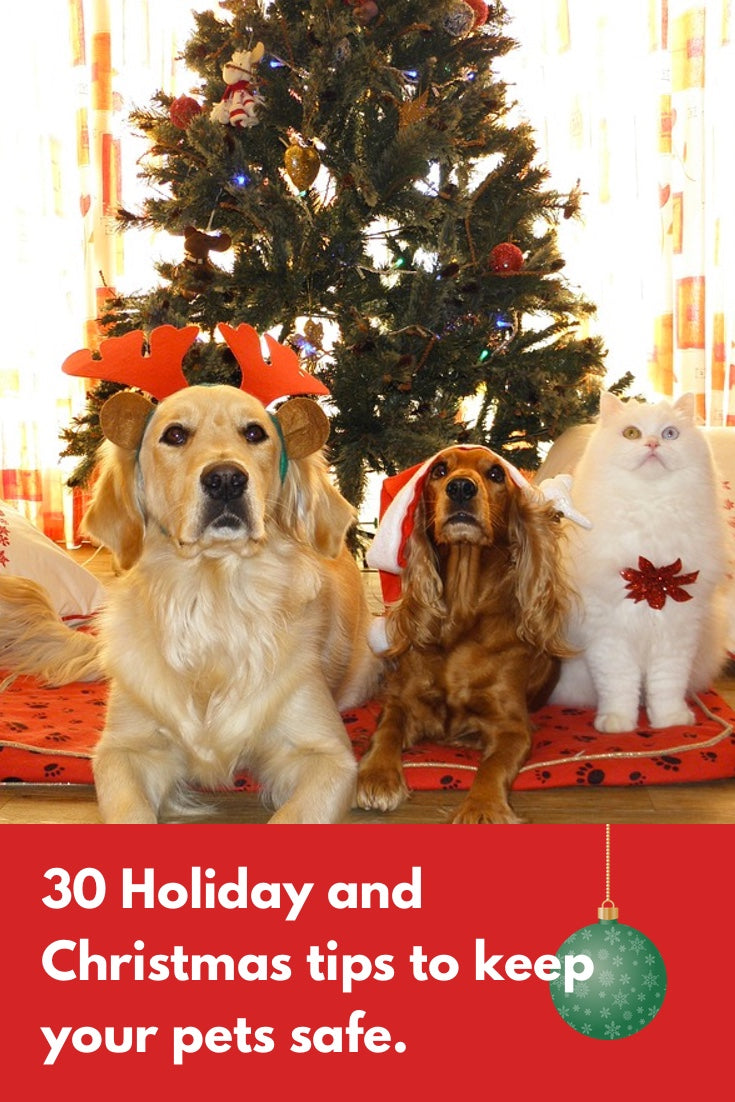 30 ways to keep your pets safe and happy during the holidays