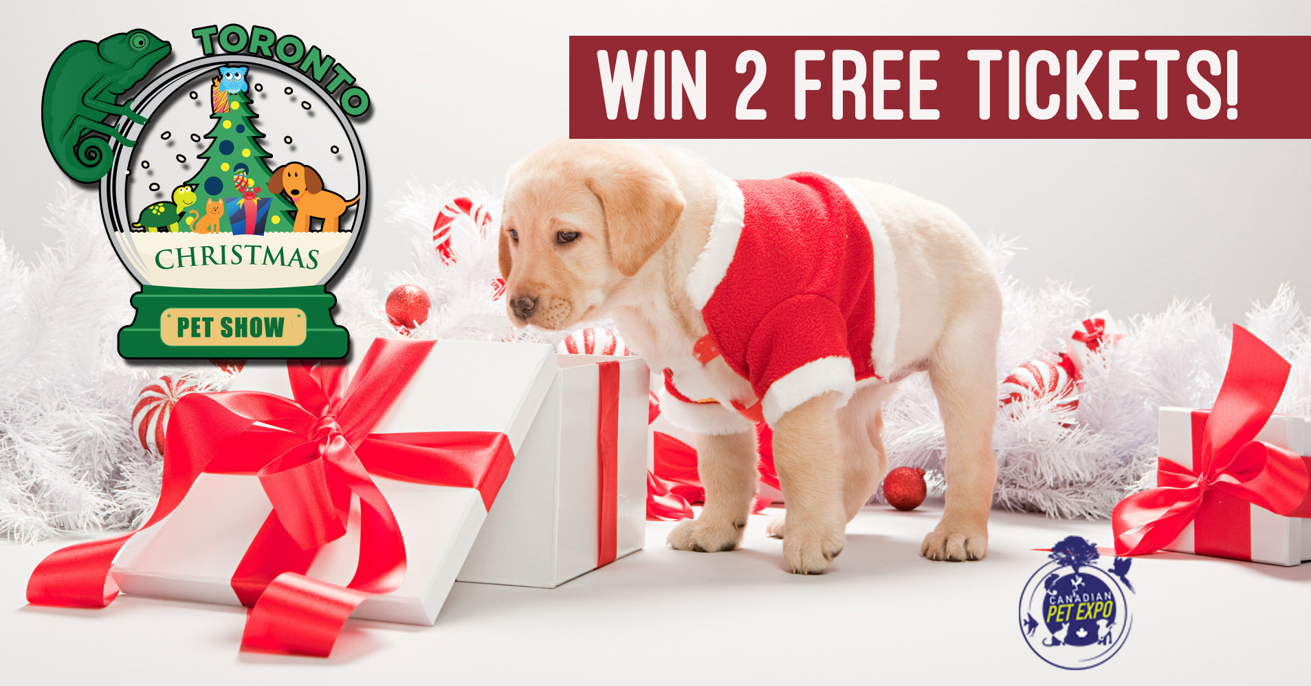 Win one of three pairs of tickets to the Christmas Canadian Pet Expo in Toronto - Treats Happen