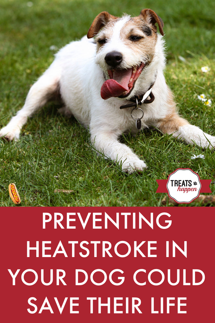 Recognize and know how to treat overheating in your dog. It could save their life.
