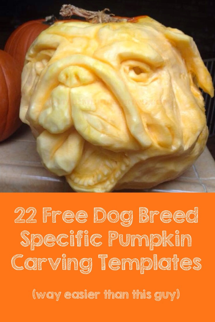 Epic bulldog pumpkin carving. 22 Free breed specific stencils.