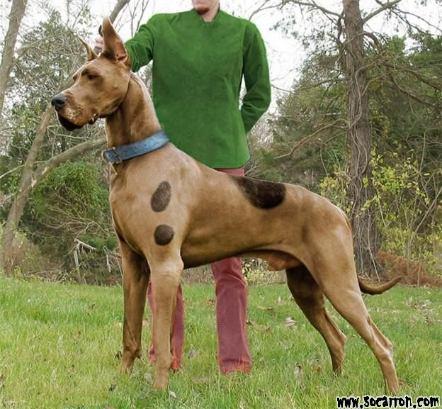 Scooby Doo Great Dane Costume