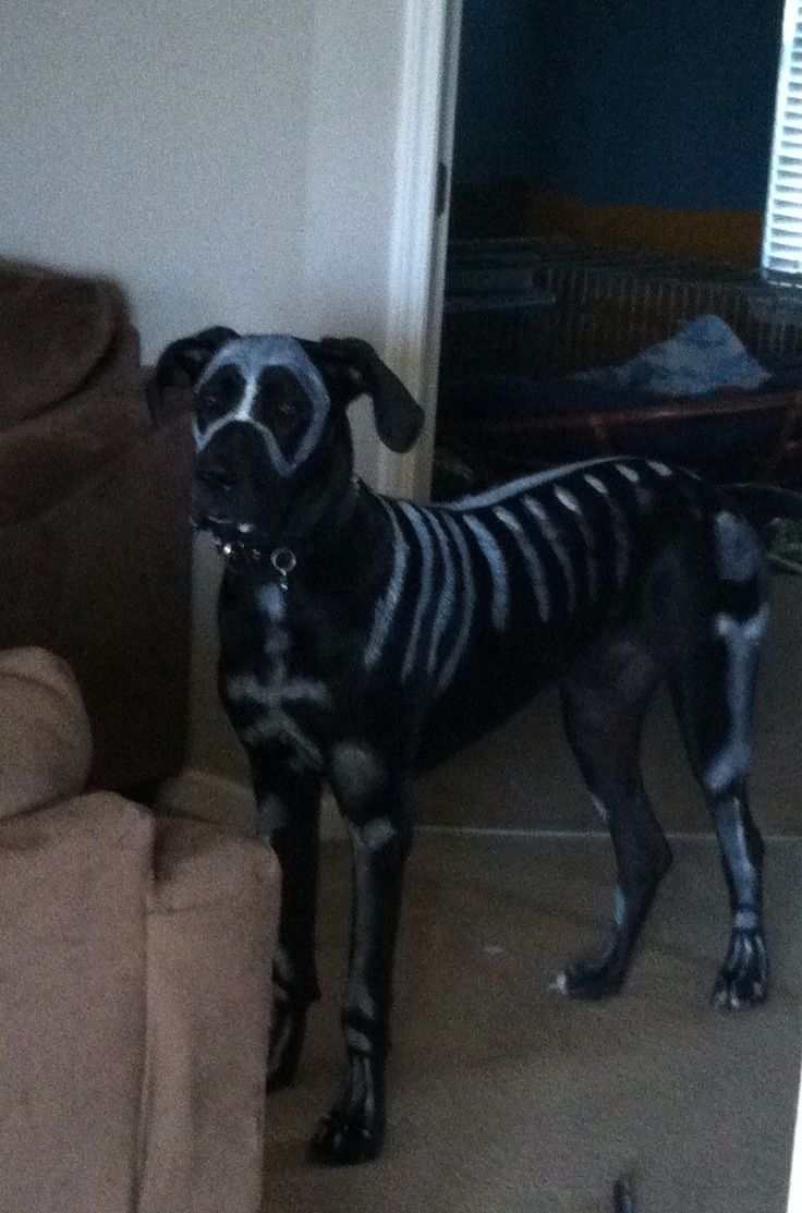 Skeleton Great Dane Costume