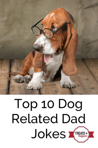 Top 10 dog related dad jokes