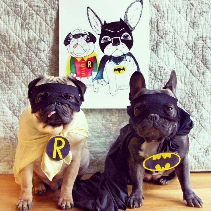 Batman and Robin Frenchie and Pug costume
