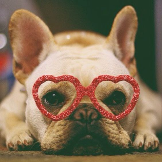 French Bulldog Valentine's Day heart glasses