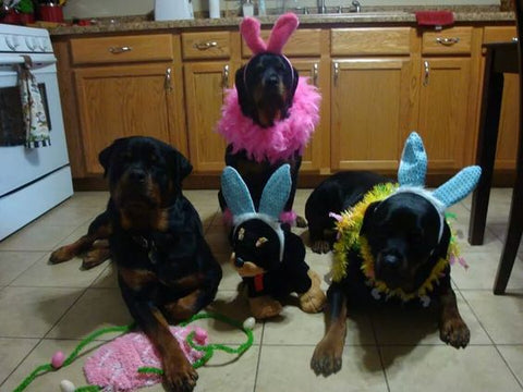 Rottweilers Easter Family Photo