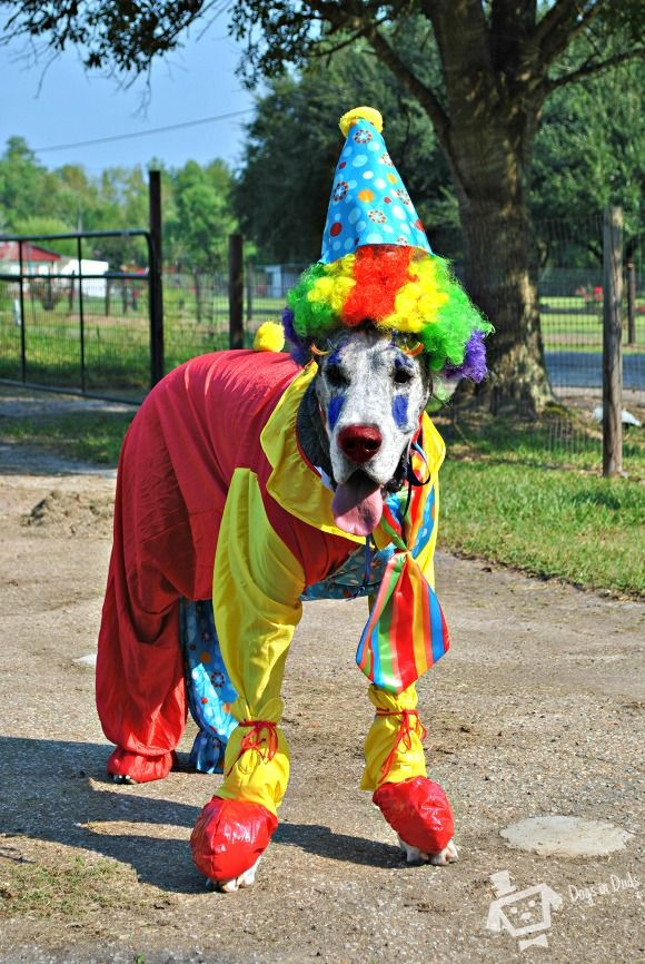 Clown Great Dane Costume