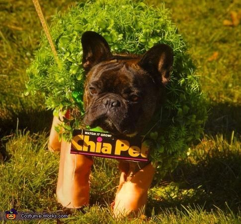 Chiapet Frenchie Costume