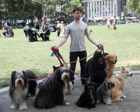 Daniel Radcliffe Walking Dogs