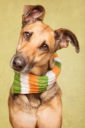 St Patricks Greyhound scarf