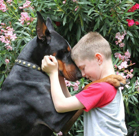 Dogs can help reduce stress and anxiety in children