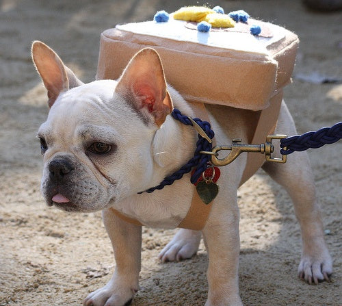 French Toast Frenchie Costume