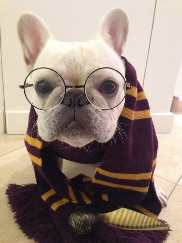 Harry Potter Frenchie Costume