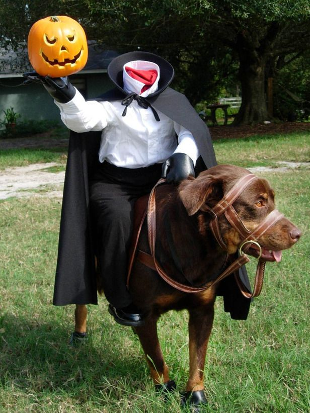 Headless horseman Great Dane Halloween costume