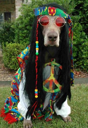 Hippie Great Dane Costume