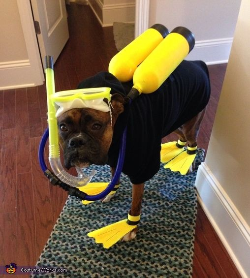 47 cute, fun, and scary Halloween costumes for your Boxer - Treats ...