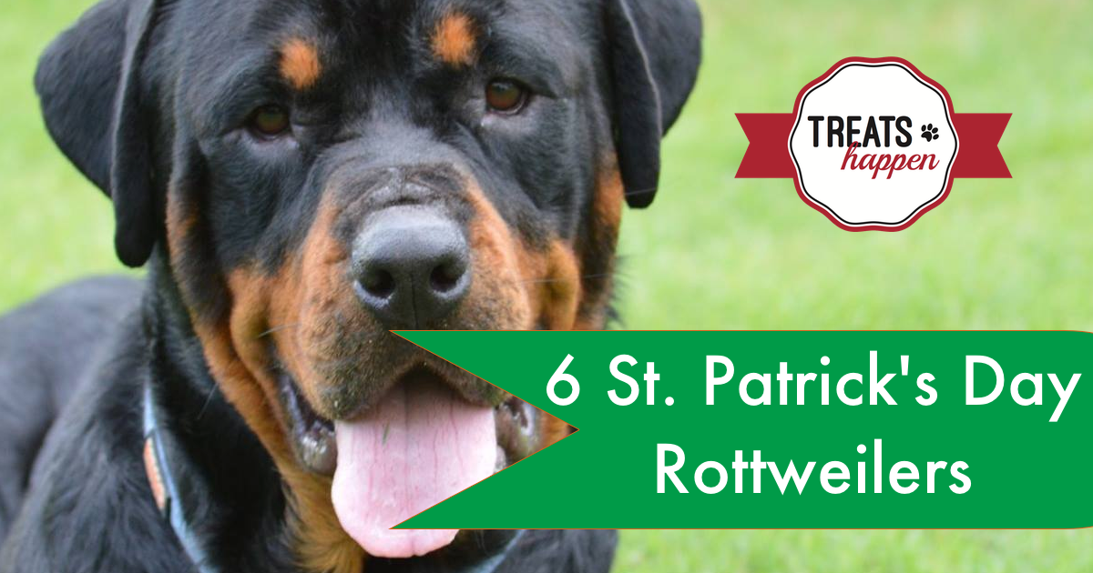 St. Patrick's Day Rottweilers