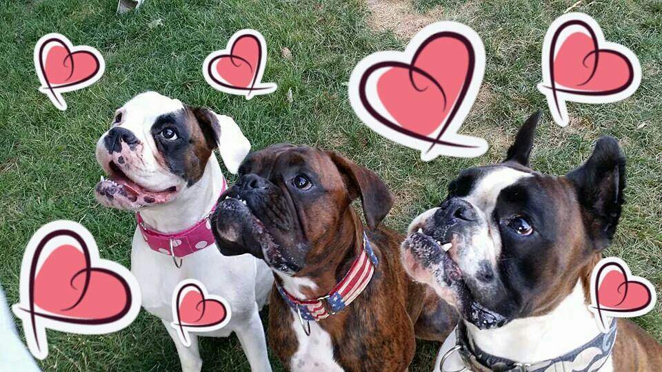 Treats Happe Boxers Valentine's Day Contest