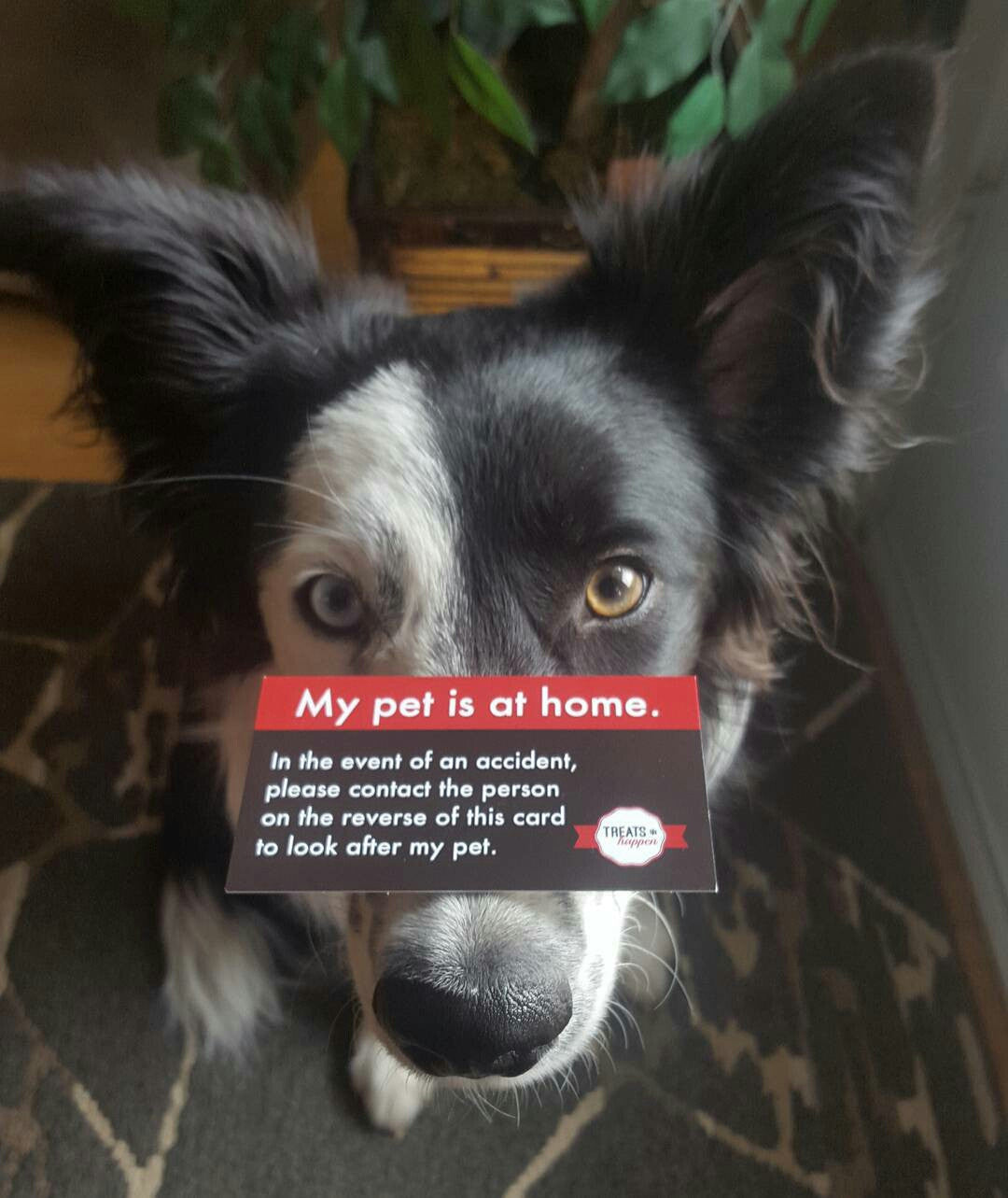 Pet inside Sticker and Pet at home Wallet card