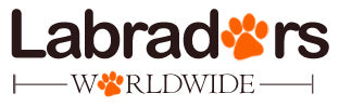 Labradors Worldwide -  A 'must see' for all Labrador Retriever lovers!