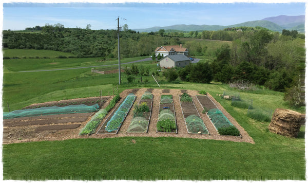 No-Dig Organic Garden at A Little Pillow Company Headquarters