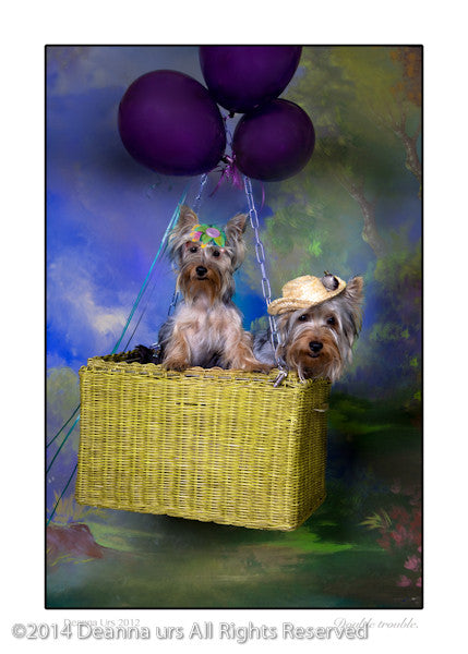 Double Dose of Trouble- Silkie Terriers