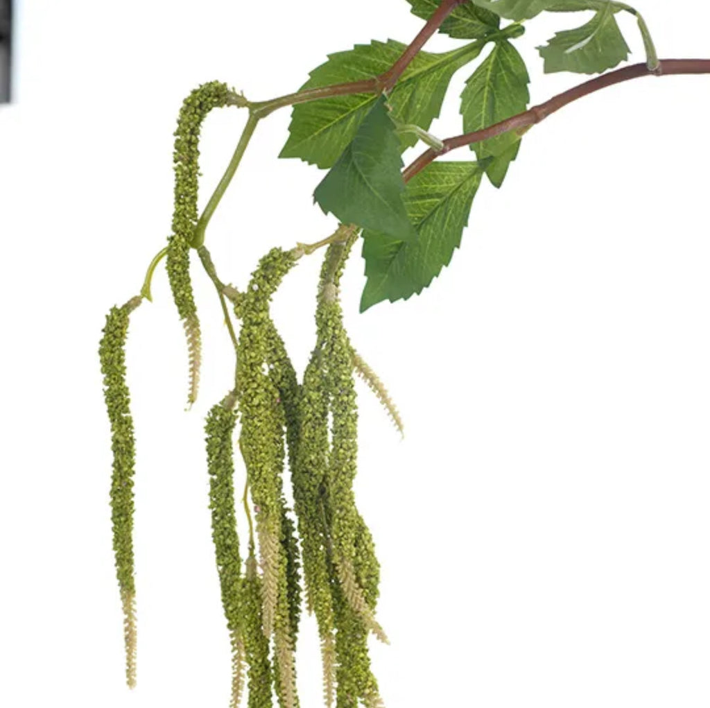 AMARANTHUS SPRAY GREEN