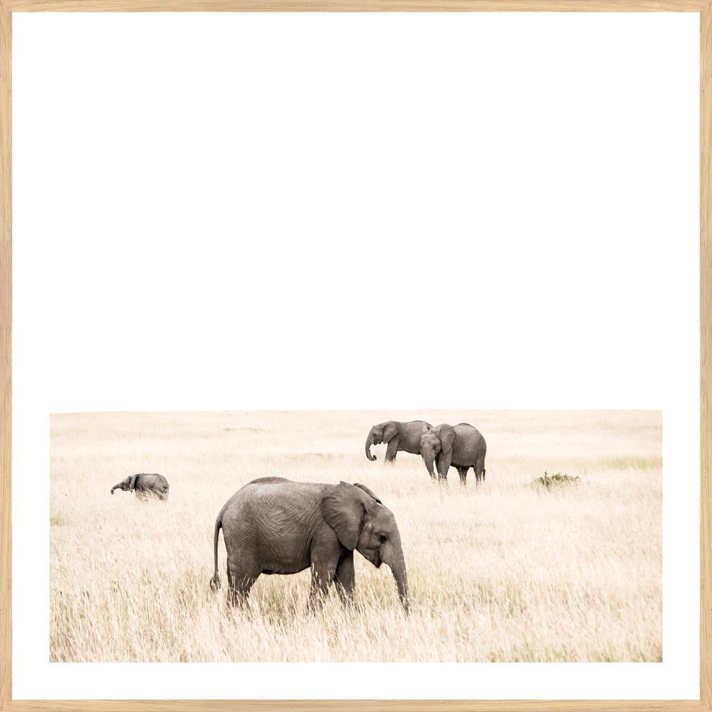 ELEPHANT ASSEMBLY, FRAMED PRINT