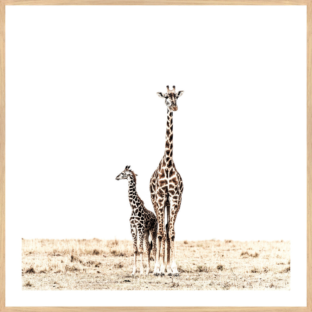 GIRAFFE DUO, FRAMED PRINT