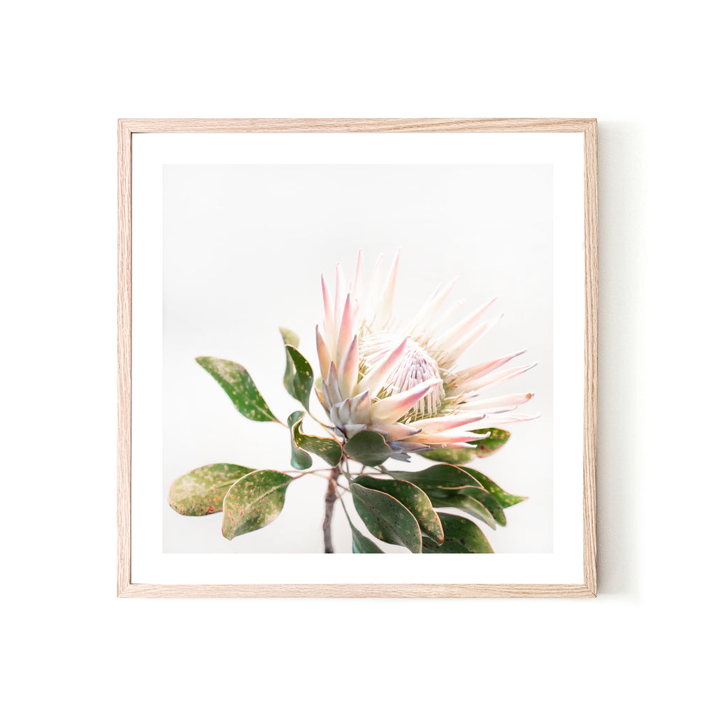 KING PROTEA 3, FRAMED PRINT