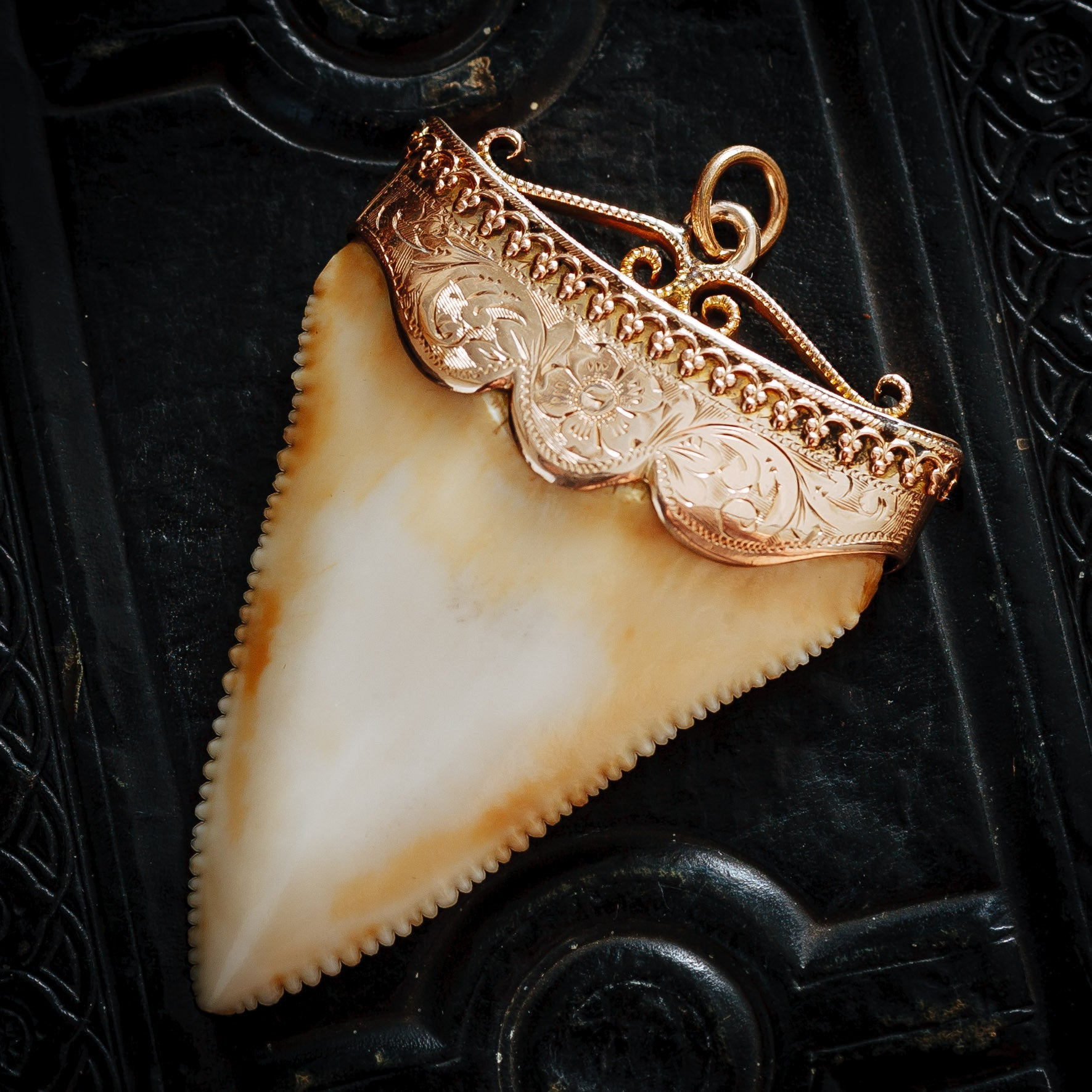 Majestic antique 15ct gold mounted great white sharks tooth pendant majestic antique 15ct gold mounted great white sharks tooth pendant aloadofball Gallery