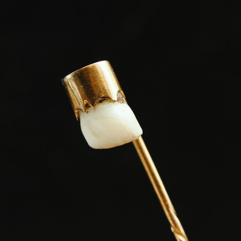 Victorian Baby Tooth Stick Pin