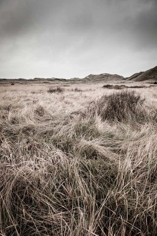 Dunes Plantation at Skagen