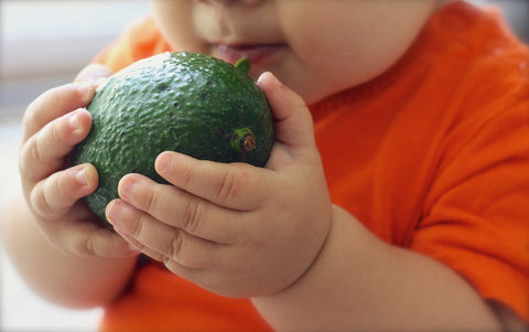 baby holding an avocado