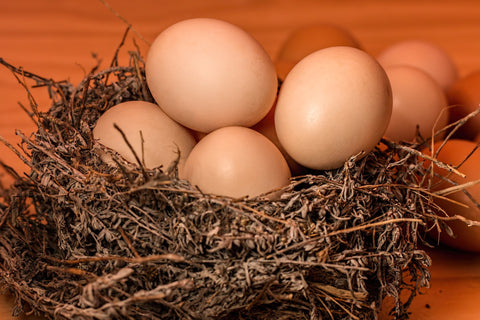 Basket of eggs for pregnancy