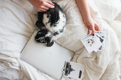 rabbit on bed with person